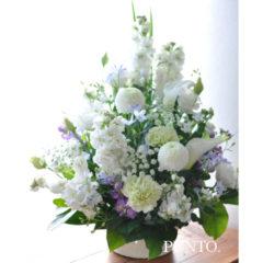 Lilac White 供花