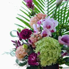 胡蝶蘭とライムライト